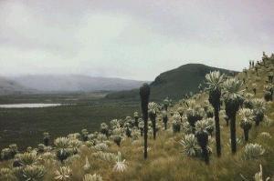 Paramo-Landschaft in Ecuador