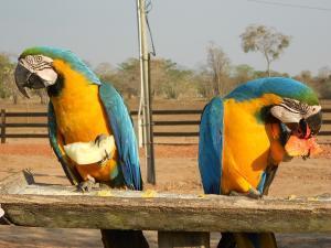 Papagaien in der Pousada