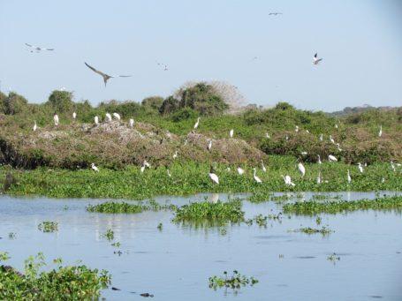 Vogelschwarm im Pantanal