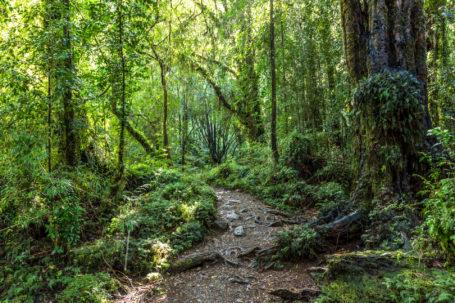 Tiefe Lärchenwäder im Nationalpark Alerce Andino