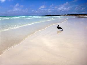 Tortuga Bay - einer der schönsten Traumstrände