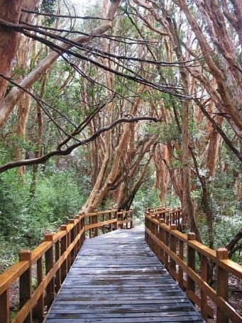 Bariloche - Bosque de Arrayanes
