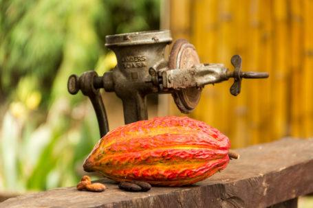 Kakao-Frucht, sowie rohe und geröstete Bohnen