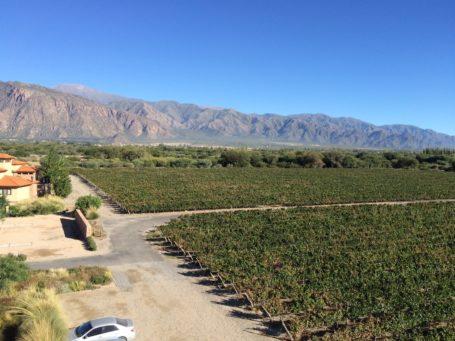 Blick über Weinreben in Cafayate