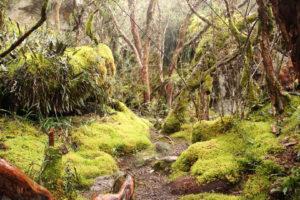 Wanderung im Nationalpark El Cajas