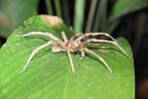 Spinne im Urwald