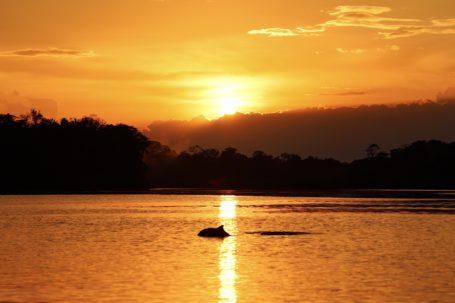 Flußdelfine auf dem Tarapoto-See