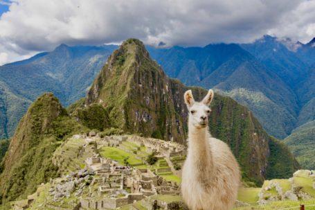 Lamas trifft man in Machu Picchu an jeder Ecke