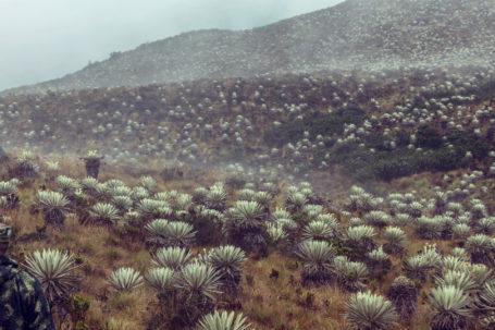 Nationalpark Sumapaz in Kolumbien