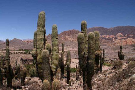 Nationalpark Los Cardones