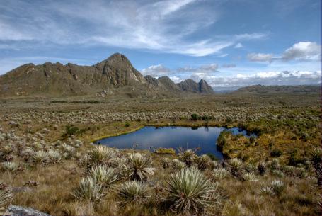 Paramo-Vegetation im Nationalpark Sumapaz