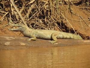 Chalalan Ecolodge / Madidi Nationalpark Tag 4