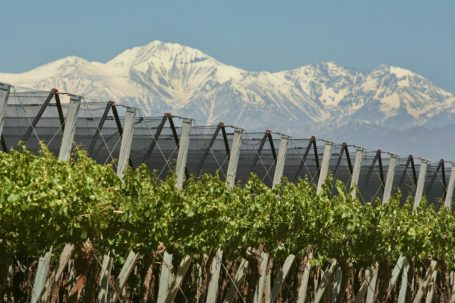 Mendoza - Weinroute