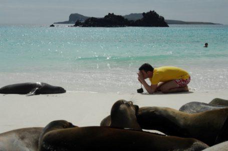 Seelöwen auf Galapagos