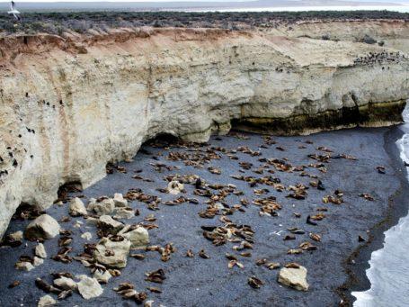 Seelöwenkolonie Punta Loma