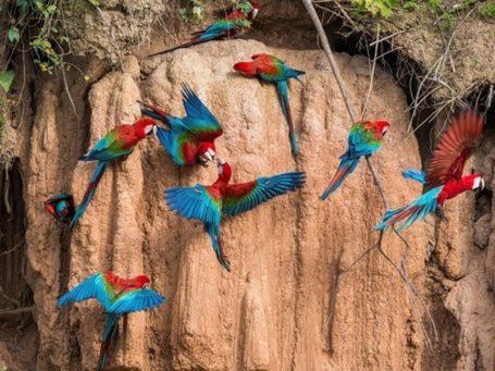 Papageienleckstelle