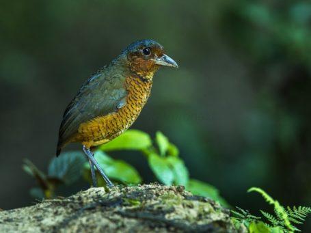 Bergnebelwald Mindo in Ecuador