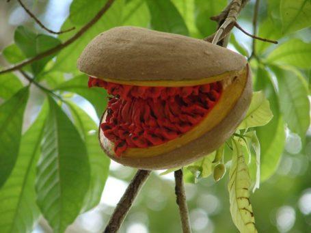 Flora in Guatemala