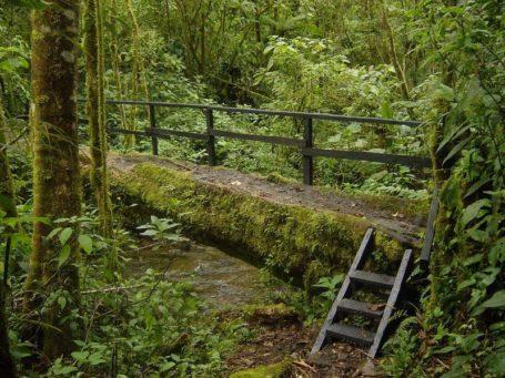 Der Nationalpark La Amistad - Panama