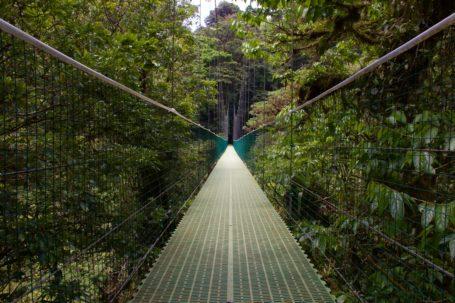 Der Monteverde Nebelwald in Costa Rica