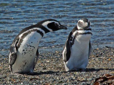 Pinguininsel Isla Martillo