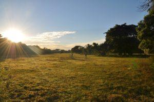 weite Landschaft im Pantanal