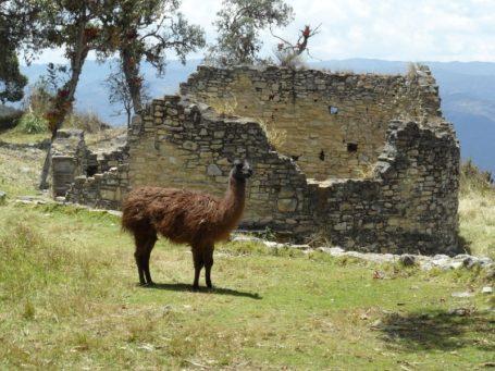 Ruinen bei Kuelap