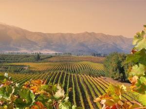 Weingüter im Maipo-Tal